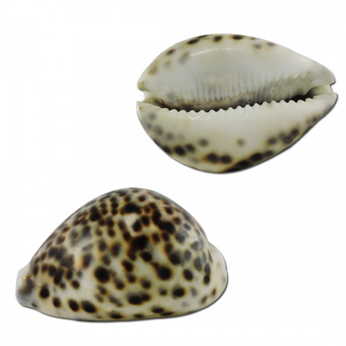 Ratnatraya Laxmi Cowry for Wealth and Pr...